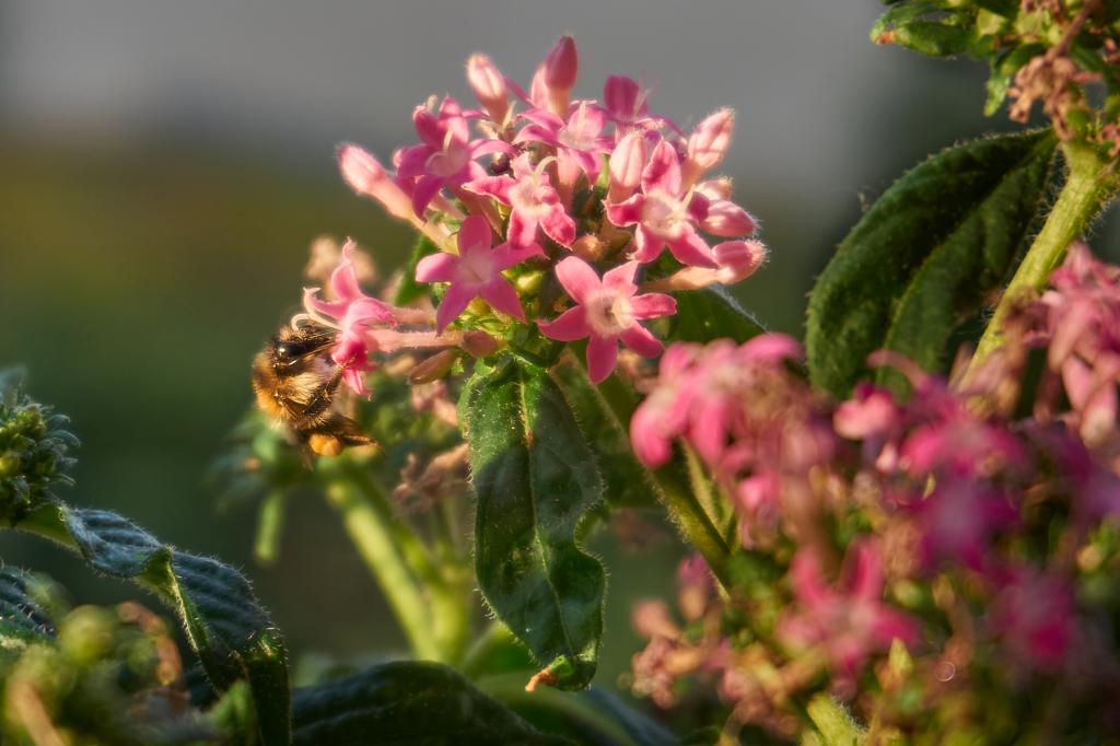 Biene auf dem Balkon